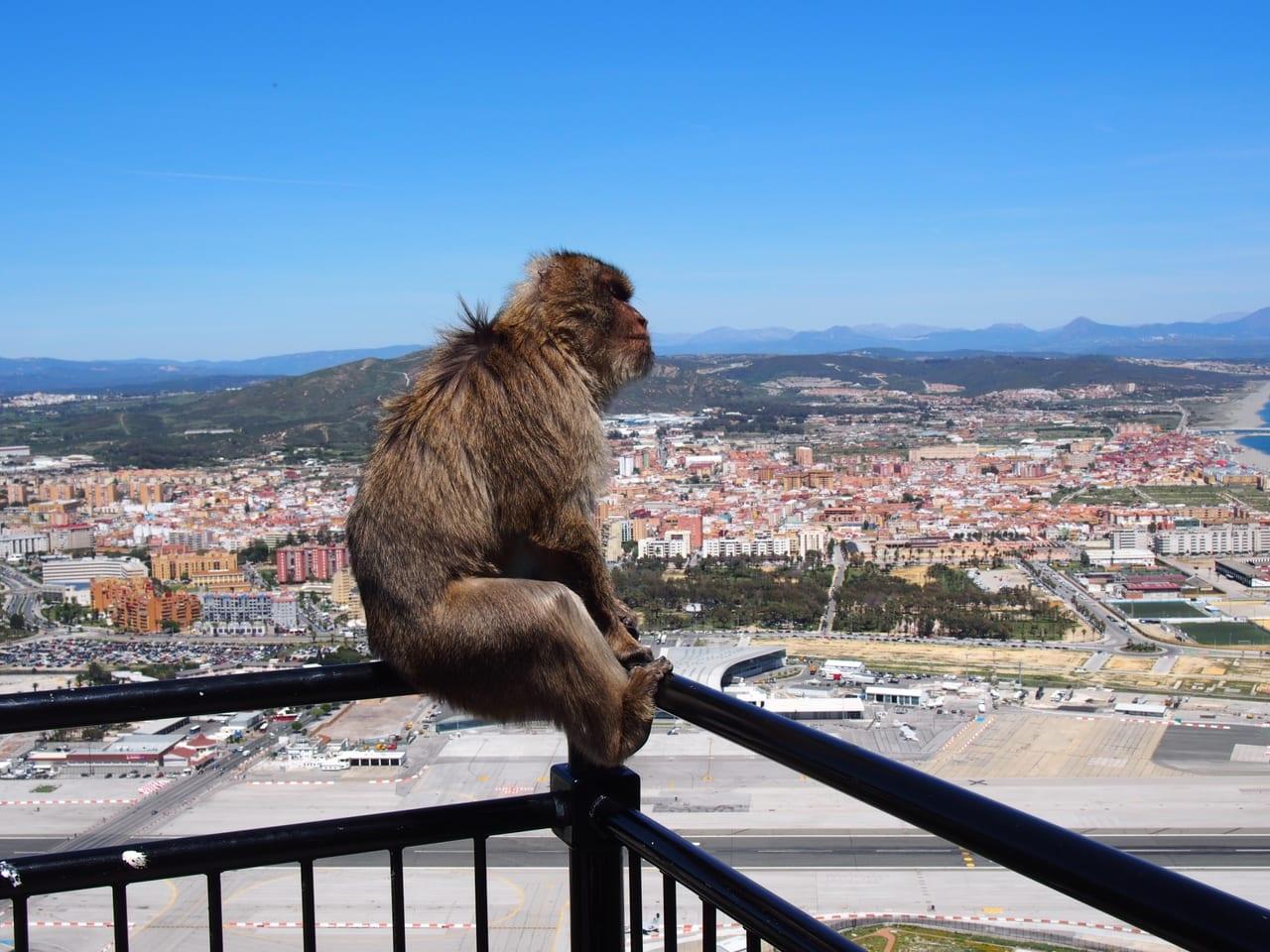 たそがれる猿